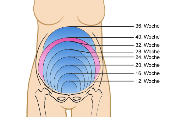 gewichtszunahme schwangerschaft pro woche