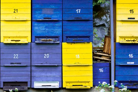 Wirtschaftsfaktor Biene