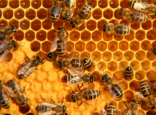 Honig = harte Arbeit