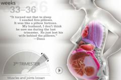 Organverschiebung Schwangerschaft