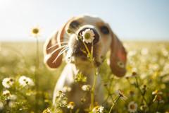 Chinesische Sternzeichen: Hund