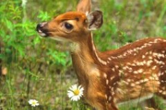 Süße Tierbabys: Kitz