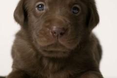 Süße Tierbabys: Schau mir in die Augen