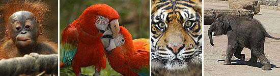 Exotische Tiere im Zoo