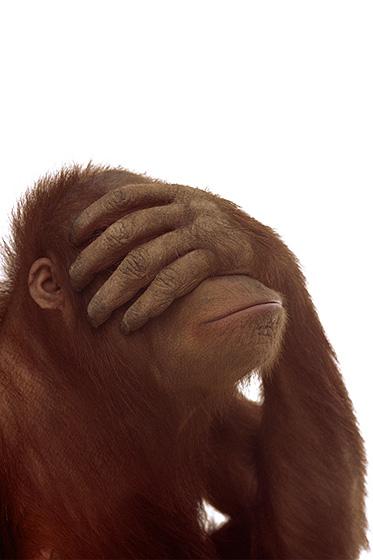 Affe mit Hand vor dem Gesicht