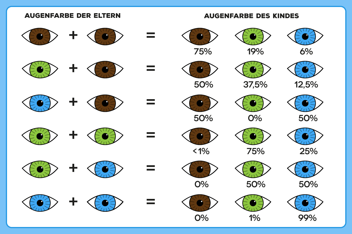 Haarfarbe vererbung tabelle