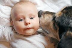 Babys und ihre vierbeinigen Freunde