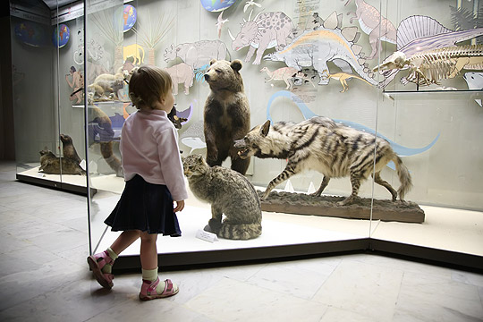 Kleines Mädchen im Naturkundemuseum