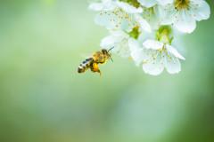 10 Bienen-Fakten