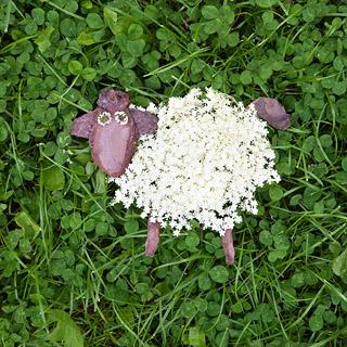 Tiere aus Blättern basteln: Schaf