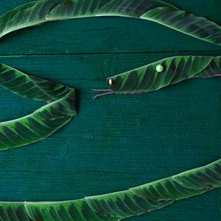 Tiere aus Blättern basteln: Schlange