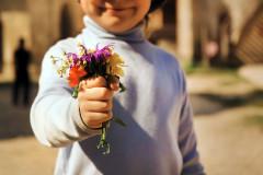 Schön aber häufig giftig: Wiesenblumen