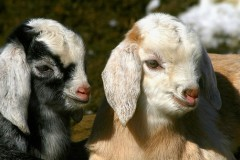 Süße Tierbabys