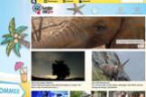 Internetseiten für Kinder: Kindernetz