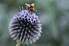 10 überraschende Bienen-Fakten