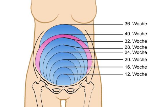 Fundusstand in der Schwangerschaft: Das müssen Sie darüber wissen