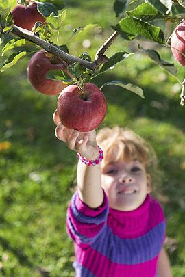 Kinder Apfelernte