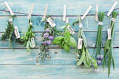 Kräuter pflanzen
