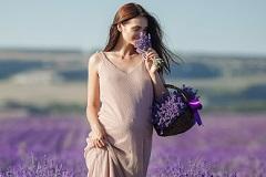 Lavendelöl in der Schwangerschaft