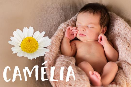 Blumige Mädchennamen: Camélia