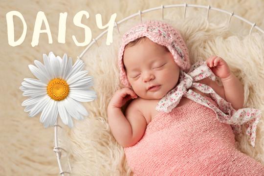 Blumige Mädchennamen: Daisy