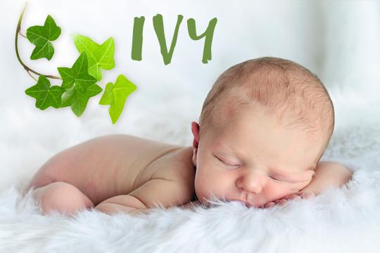 Blumige Mädchennamen: Ivy