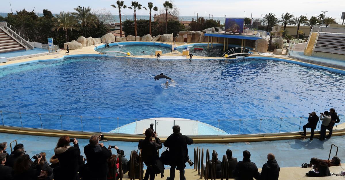 Delfin im Marineland in Frankreich
