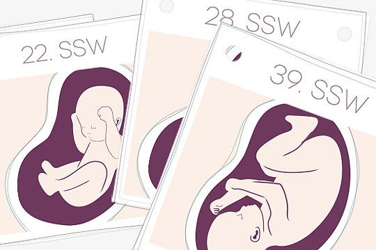 Neu auf familie.de: Schwangerschaftskalender