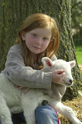 Kind mit Lamm auf Pellworm