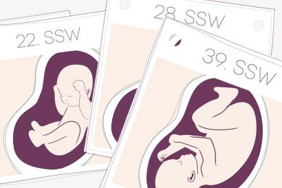 Mit dem Schwangerschaftskalender durch 40 spannende Wochen