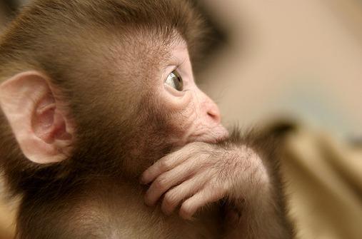 Lanugobehaarung ist ein wichtiger Schutz des Babys während seiner Zeit  in der Gebärmutter