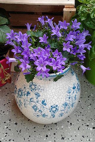 Vasen als Pflanzgefäß?