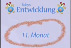 Video zur Baby-Entwicklung: 11. Monat