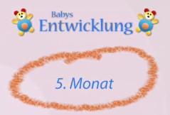 Wie entwickelt sich mein Baby im 5. Monat?
