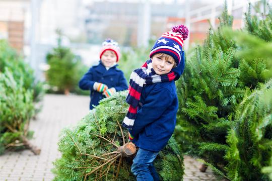 Zwei Jungen mit Tannenbaum