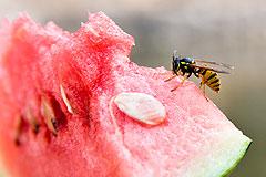 Hilfe gegen Insektenstiche