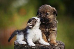 Haustiere für Kinder: Was passt?
