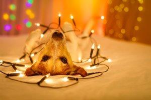 Silvesterdeko: Der Hund